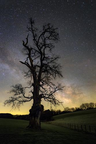 Le vieil arbre et la Voie lactée